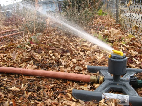 For most of us, winter watering means dragging a hose.