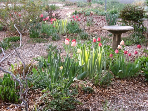 Here is my front garden on Tuesday morning, May 6.